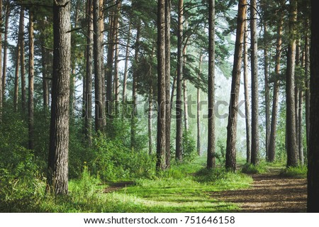Beautiful summer forest with different trees Royalty-Free Stock Photo #751646158