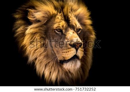 Lion Head #751732252