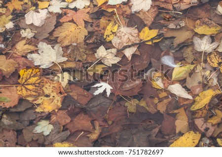 closeup of autumnal leaves in the water #751782697