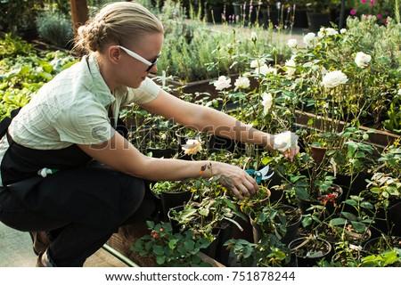 Cutting seedlings flowers #751878244