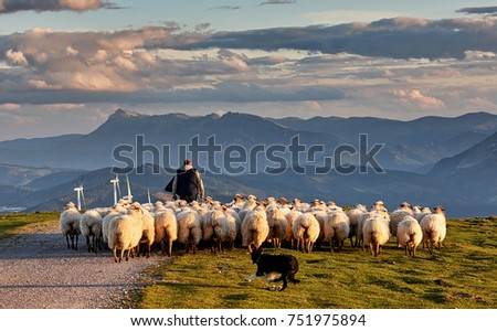 Flock of sheep with shepherd and dog in Oiz, Basque Country #751975894