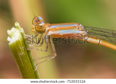 Insect in thailand #752031526