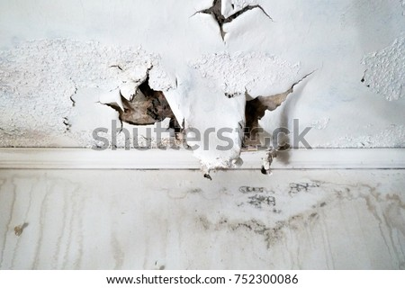Ceiling and wall with rain damage due to violent weather and roof damage                                #752300086