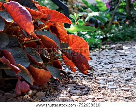 Leaf and light #752658310