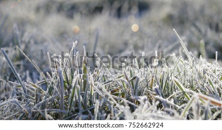 grass in the frost, morning frost Royalty-Free Stock Photo #752662924