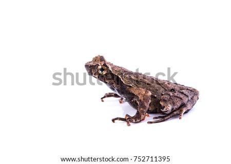 amphibians of tropical rainforest #752711395
