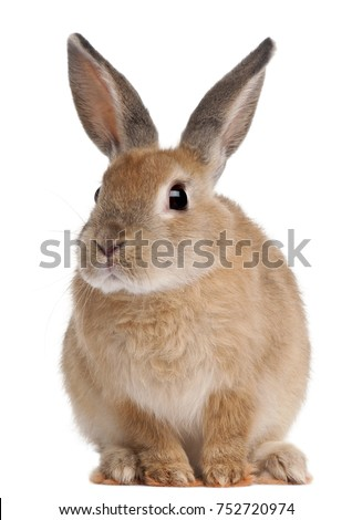 Bunny rabbit sitting in front of white background #752720974