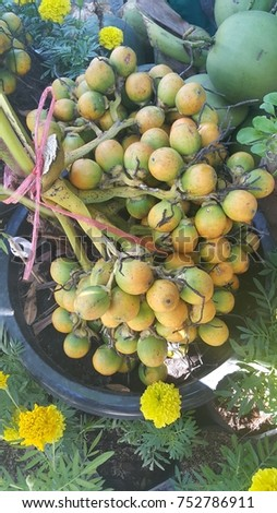Ripe Areca nut  in  Asia market.the Areca nut is not a true nut ,but rather a fruit categorized as a berry. It is commercially available in dried,cured and fresh forms. #752786911