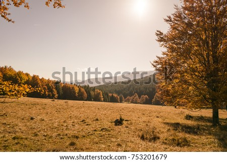 top of the trees in autumn forest at sunset #753201679