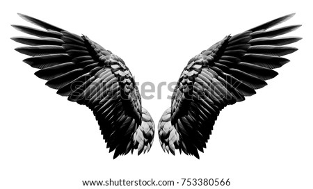 Angel wings, Natural black wing plumage isolated on white background with clipping part #753380566