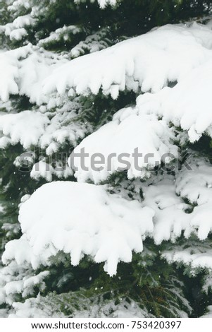 Fir branches covered with hoar frost Wonderland. Winter snowy pine Christmas tree scene. Calm blurry snow flakes winter background with copy space. Winter is coming New year. #753420397