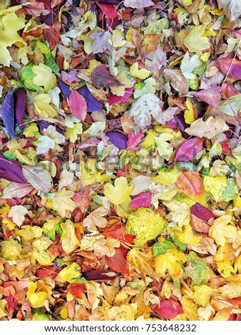 Multicolored fall leaves on ground during autumn in Utah #753648232