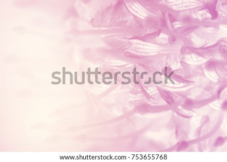 flower on soft pastel color in blur style #753655768