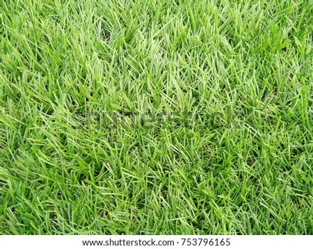 artificial grass green #753796165