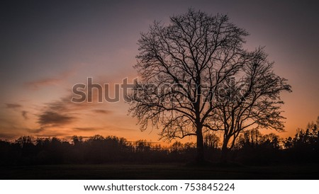 Tree during a beautiful sunset with clouds in the sky. #753845224