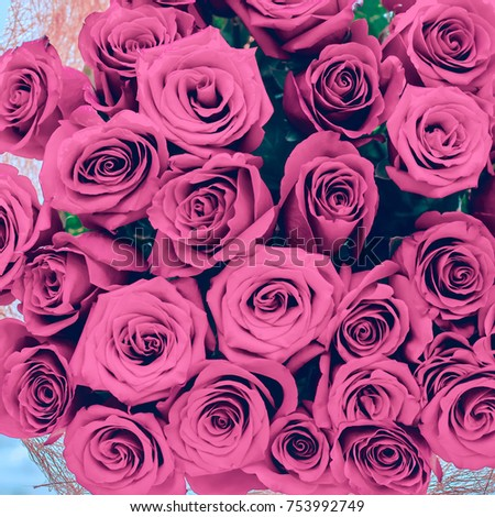 Pink roses  for the background #753992749