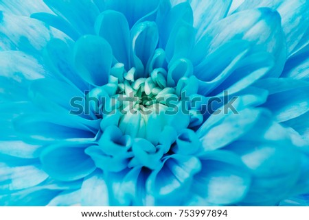 beautiful macro flowers blue color is lying on a white table #753997894