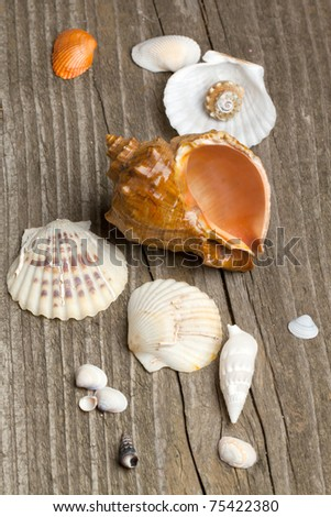 Sea shells collection on old wooden background #75422380