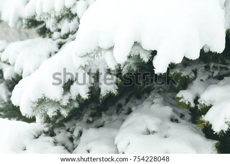 Fir branches covered with hoar frost Wonderland. Winter snowy pine Christmas tree scene. Calm blurry snow flakes winter background with copy space. Winter is coming New year. #754228048