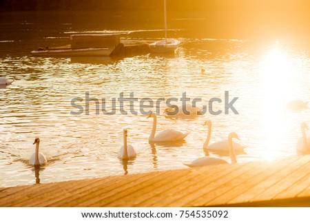 White swans on the lake #754535092