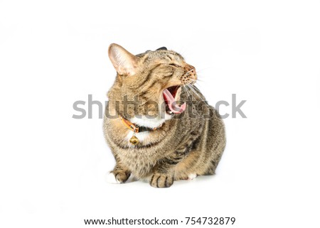 tabby cat with to sleeping #754732879