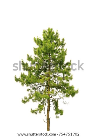 Pine tree on white background #754751902
