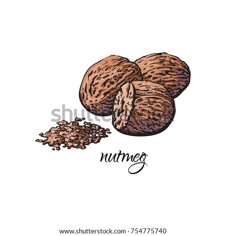 Whole and ground fragrant nutmeg with caption, sketch style vector illustration isolated on white background. Hand drawn nutmeg, whole and powder, vector illustration Royalty-Free Stock Photo #754775740