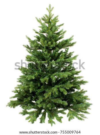 Green Pine, christmas tree isolated on white closeup Royalty-Free Stock Photo #755009764