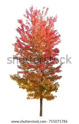 Japanese color change tree. #755071786
