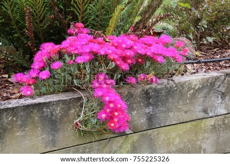 flowers hanging over wall  #755225326