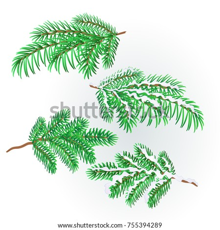 Pine  and pine cone branch autumnal and winter snowy  natural background vector illustration editable hand draw #755394289
