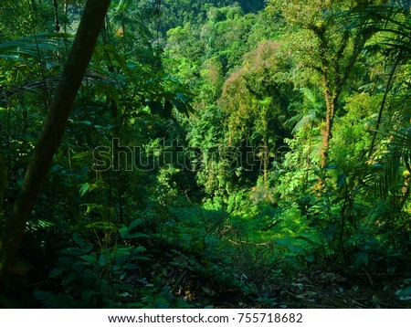 Forest very green #755718682