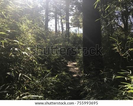 Cedar Pine Alpine Forest tress #755993695