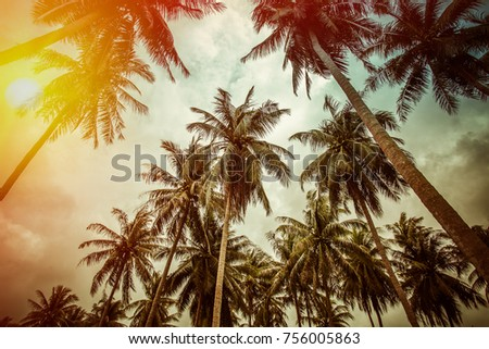 Branches of coconut palms under blue sky - vintage retro style #756005863