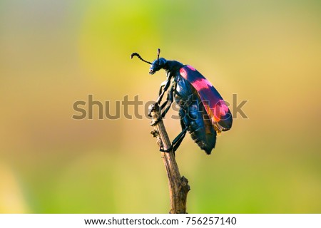 Beetles are a group of insects that form order Coleoptera, in the superorder Endopterygota. Their front pair of wings is hardened into wing-cases, elytra, distinguishing them from most other insects Royalty-Free Stock Photo #756257140