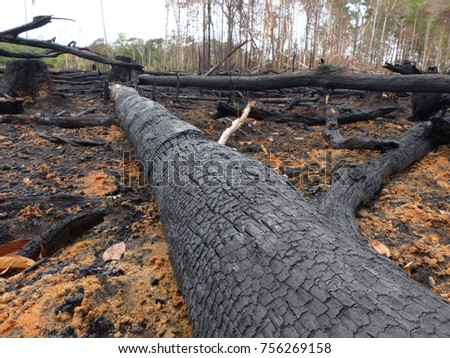 Destroyed Amazon rainforest by slash-and-burn, Brazil. Photo taken February 2, 2016