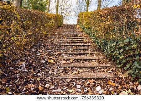 Stairs in park covered by fallen leaves in Autumn - Nature seasonal background 2 #756335320