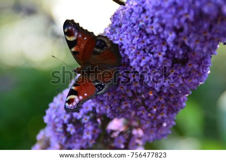 closeup picture of a butterfly in my garden