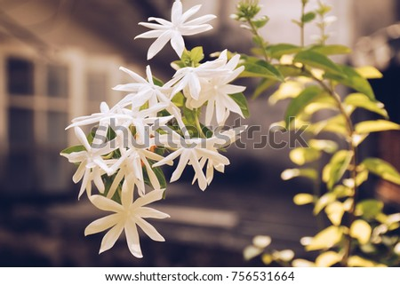 White flowers and sunshine in the morning with blurred background of windows.