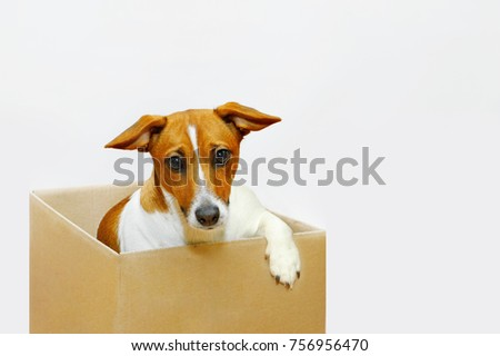 Cute sadness dog sit in the cardboard box.