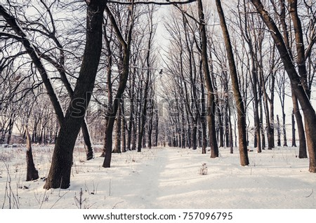 Winter Landscape with Snowy Forest #757096795