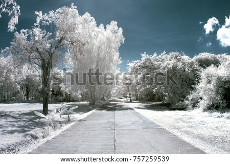 Walking in the Park with Near Infrared Photography
