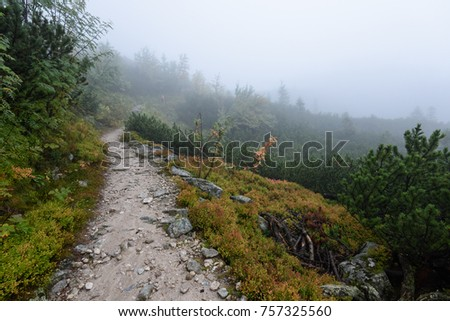 western carpathian mountain tourist trail track on rocky surface in  autumn covered in mist #757325560
