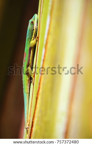Side view of colorful gecko of Madagascar #757372480
