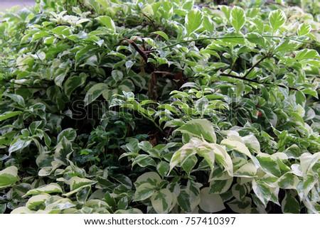 green nature leaf #757410397