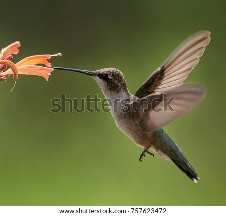 Beautiful hummingbird photo in a natural environment