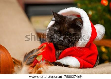 Festive portrait of black cat in Santa Claus costume