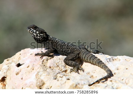 lizard sits on a rock and basks under the sun #758285896