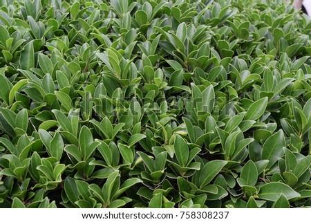 Little green leaves for background #758308237