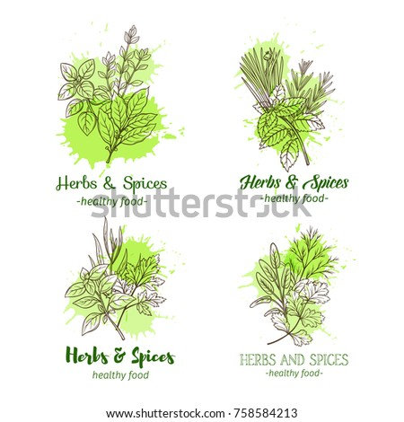 Banner template with hand drawn sketch herbs and spices for farmers market menu design. Vector illustration page decoration culinary herbs in ink retro style. #758584213
